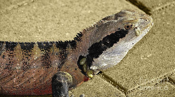 #Jewels on a #Dragon by #Kaye_Menner #Photography Quality Prints Cards Products at: http://kaye-menner.pixels.com/featured/jewels-on-a-dragon-by-kaye-menner-kaye-menner.html