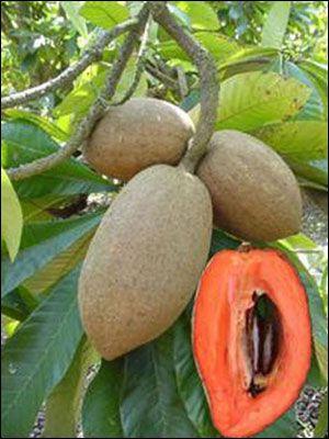 Sólo crecido en América Central es esta fruta única. Es sabroso con un sabor jugoso.