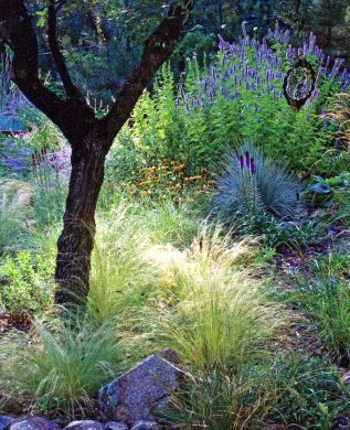 47 best drought tolerant landscaping images on pinterest for California native landscape design