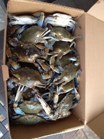 Annapolis Seafood Market, Severna Park-FRESH Maryland Blue Crabs