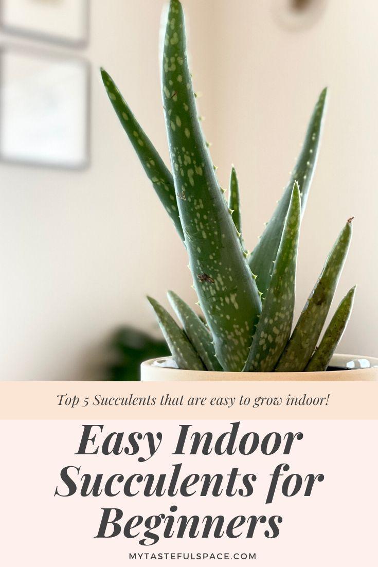 5 Easy Indoor Succulents For Beginners My Tasteful Space Succulents Indoor Succulents Best Indoor Plants
