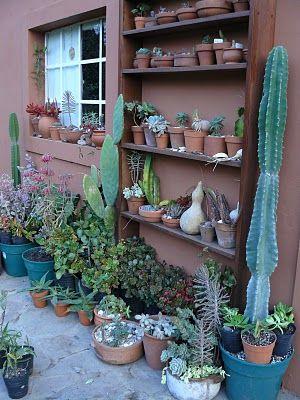 Jardines de cactus y suculentas: septiembre 2010