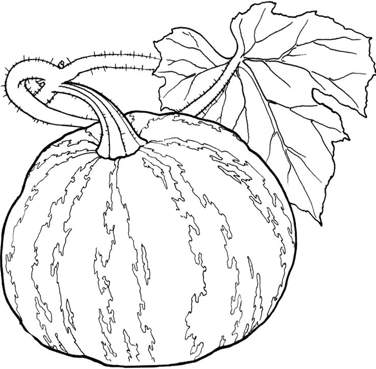 500 best food, drink and cooking coloring pages images on ... - Coloring Pages Leafy Vegetables