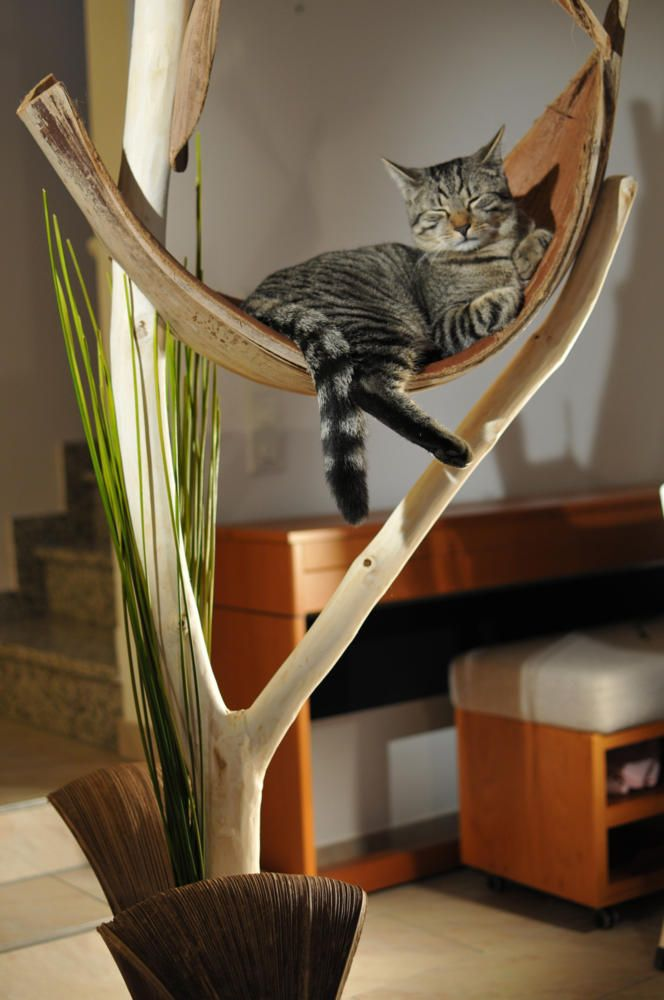 18 best kurs katzenbaum images on pinterest pets cat. Black Bedroom Furniture Sets. Home Design Ideas