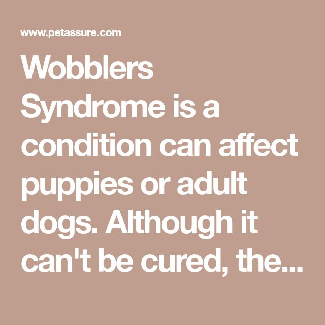 Wobblers Syndrome Is A Condition Can Affect Puppies Or Adult Dogs