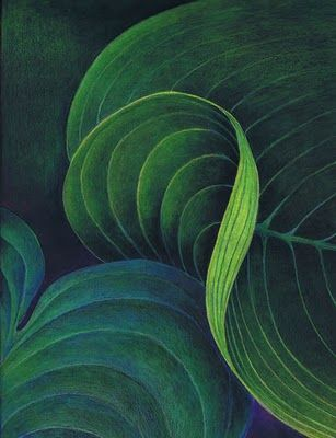"""Artworks Currently Available from Helen Read: Curvature - leaf abstraction Curvature, 12.75 x 9.75"""" Colored pencil on black drawing paper"""