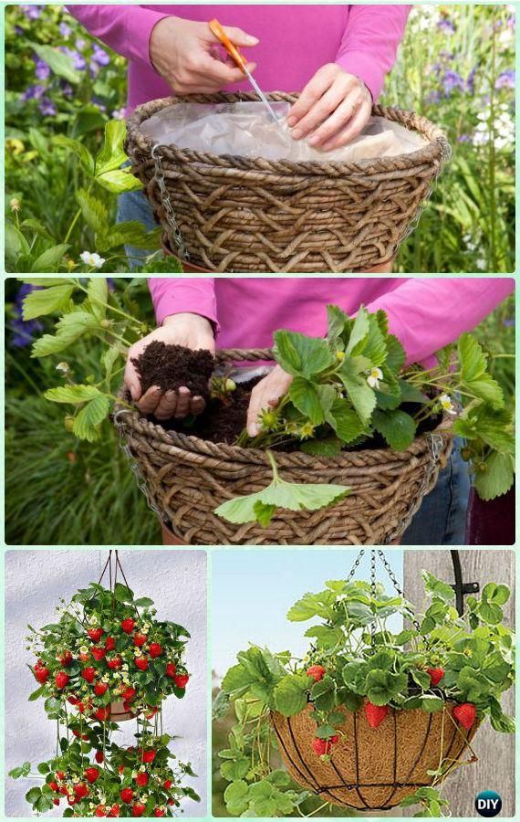 DIY Hanging Strawberry Basket Instruction- #Gardening Tips to Grow Vertical Strawberries Gardens