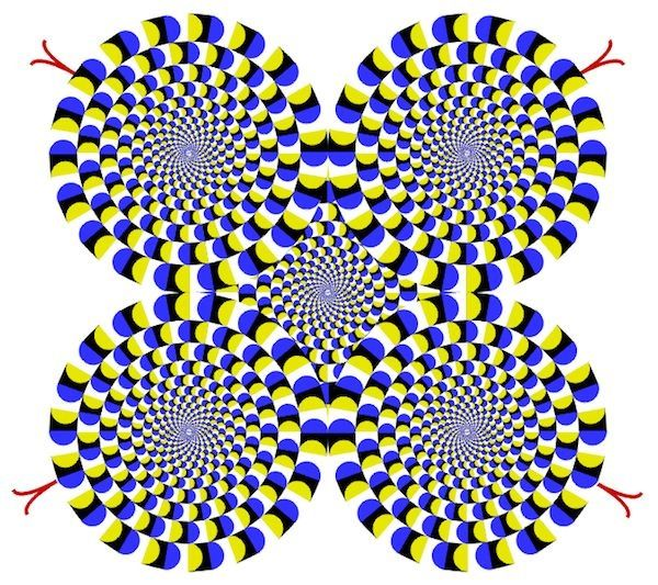 Best Optical Illusions Images On Pinterest Optical Illusion - Fascinating optical illusion disguises 12 black dots right in front of you
