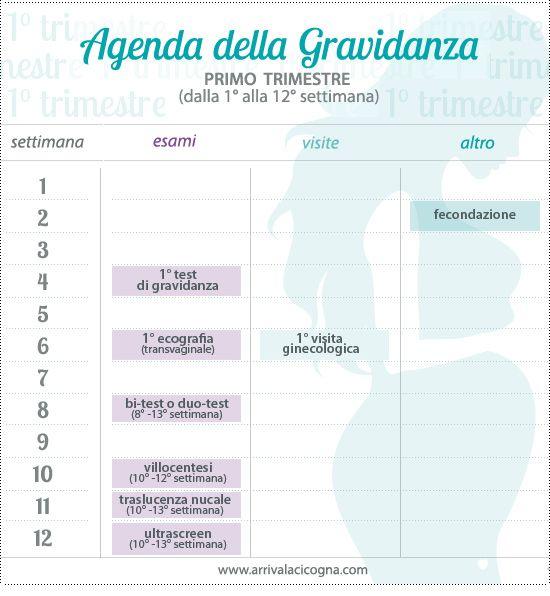 calendario visite in gravidanza, primo trimestre