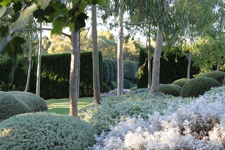 The Garden Vineyard Moorooduc  (lavender, rosemary, santolina, westringia fruticosa)