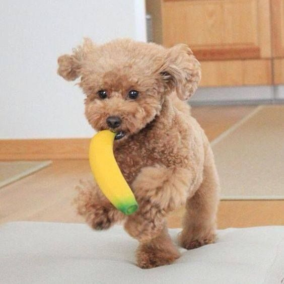Meet Mr Pino on a banana run does your little one like to run away with their toys???