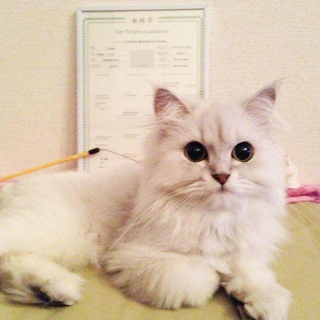 のえるちゃん Cats Animals
