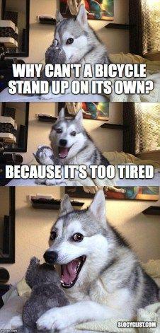 funny meme about bicycles pad pun dog cycling joke