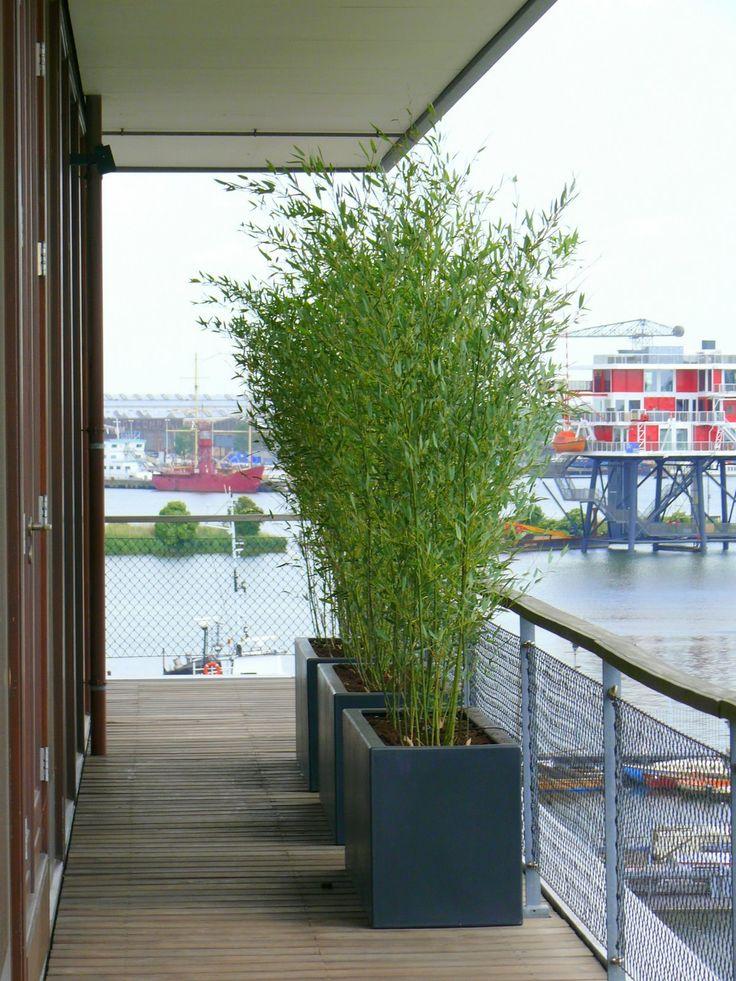 Meer dan 1000 idee n over border planten op pinterest struiken vaste planten en tuin kanten - Bamboe in bakken terras ...