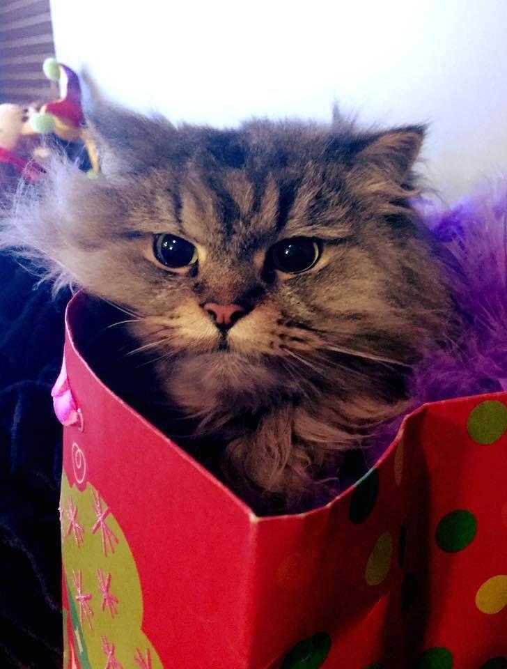 grumpy cat wedding invitations%0A cat in the bag gift bag birthday hairy cute cat