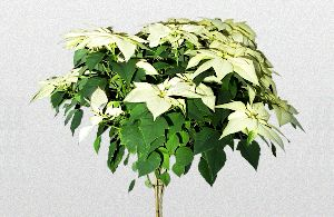 proflowers christmas tree coupon code