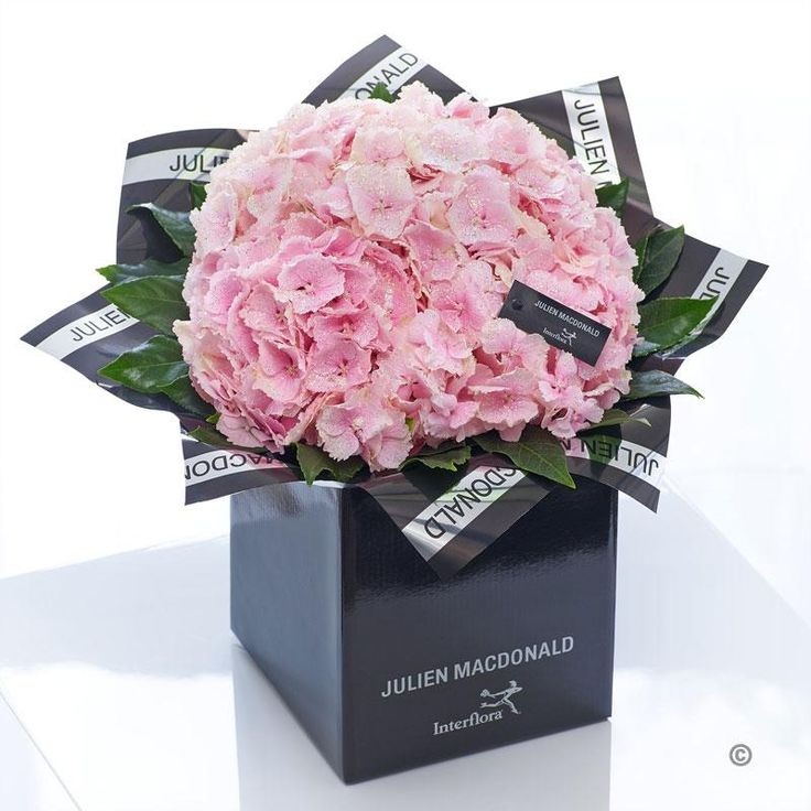 The hydrangea is back in vogue – and when you see this picture-perfect canopy of petals in pastel pink, it's easy to see why. Here we've chosen the finest quality blooms and presented them in sumptuous designer packaging. It's a chic and understated gift that just exudes natural beauty.