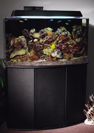 Best 20 55 Gallon Aquarium Stand Ideas On Pinterest 55