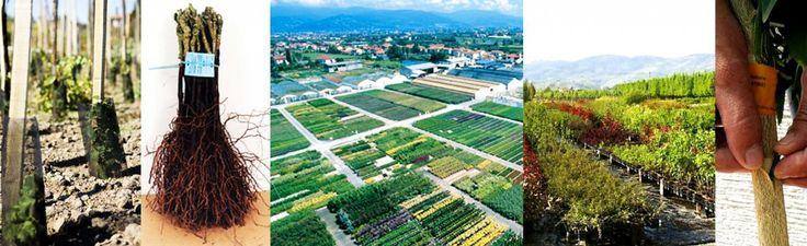 materiale vivaistico certificato | sTreet Progettazione del verde e riqualificazione urbana