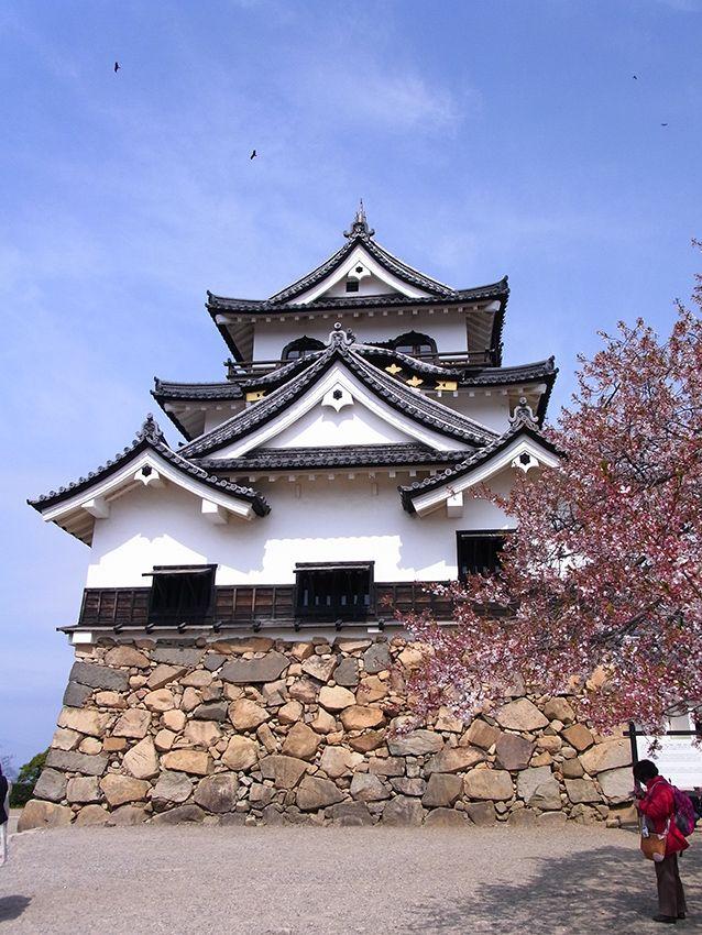 春の彦根城。桜が散ってしまっていて残念……
