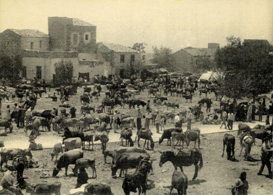 Ζωοπανήγυρη στην Αρεόπολη. Δεκαετία '50. Φωτ.: Συλλογή του Κώστα Δρογκάρη.