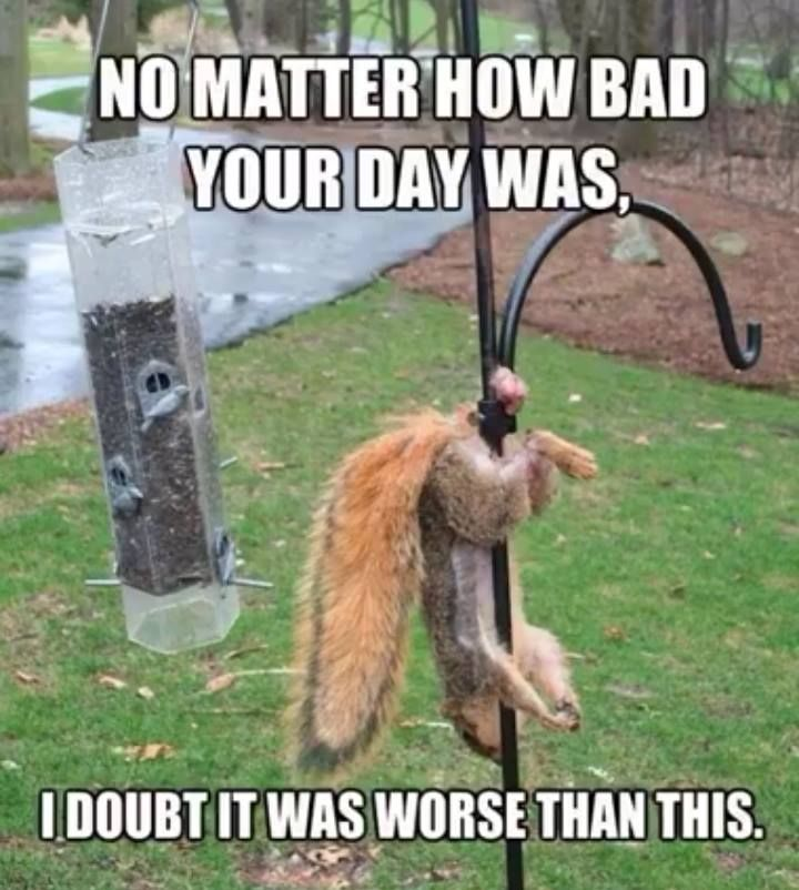 I Doubt You Bad Day Was Worse Than This Bad Day Humor Bad Day Quotes Bad Day Meme