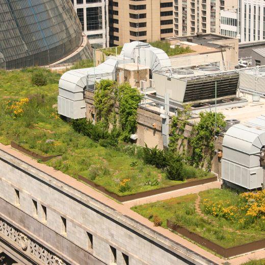 Chicago City Hall Green Roof Portfolio :: Conservation Design Forum