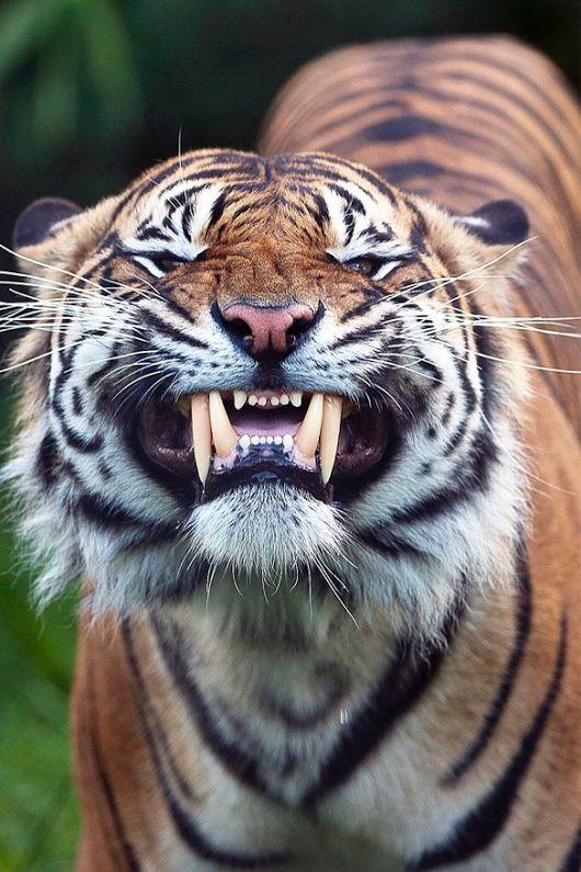 Quem diria que ate aqueles que são temidos podem nos mostra um lindo sorriso carinhosamente