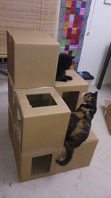 What cat doesn't like to play in cardboard boxes. Here's a cheap solution to a cat tree. Of course, it won't look this nice after my 3 girls get a hold of it. http://amzn.to/2k2HTMQ