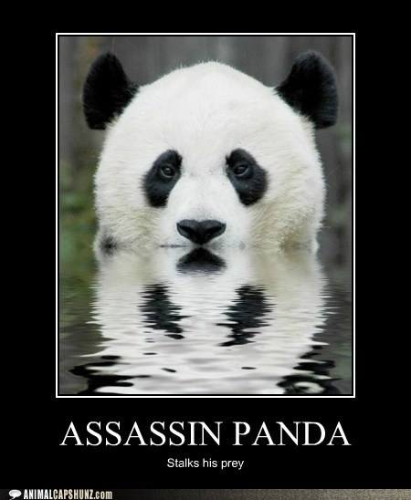 Panda pictures funny impremedia find this pin and more on funny pandas voltagebd Image collections