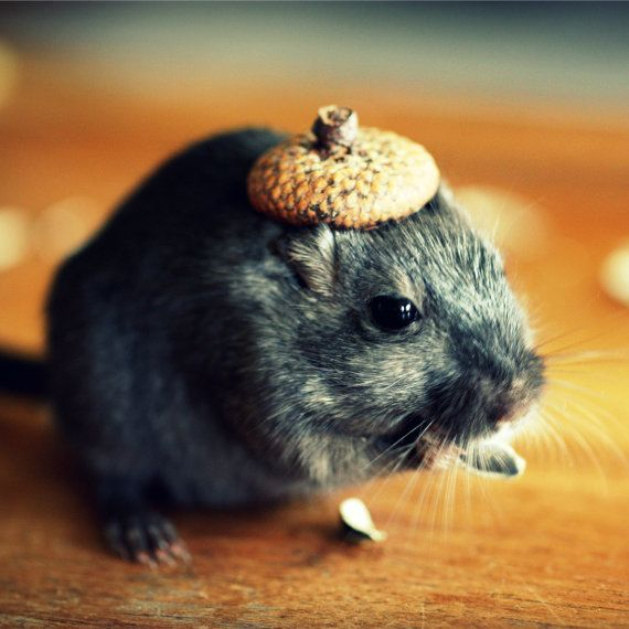 how to make tiny hats for pets