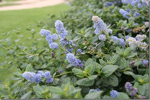 Best 25 California Native Garden Ideas On Pinterest California Native Plants Xeriscape