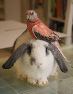 Jessica Greenwalt's pink parakeet Roubaix, perching on a bunny.