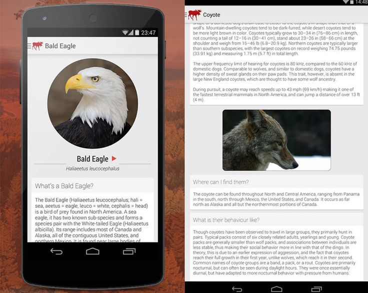 Wildlife of North America-great app http://www.apps4outdoors.com/wildlife-of-north-america-app-for-android/