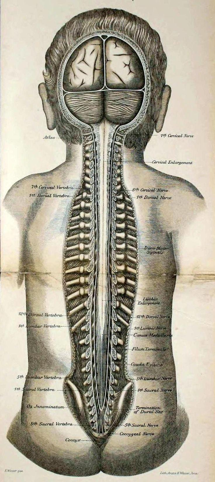 342 best avec à corps images on Pinterest | Anatomy, Medical science ...