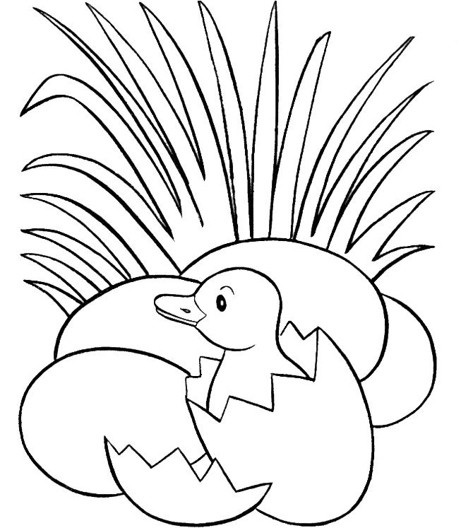 duck egg coloring pages - photo#9
