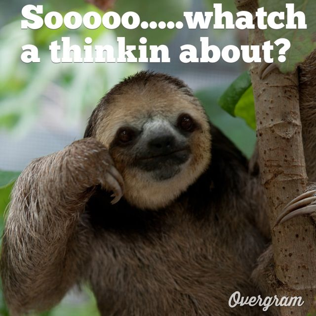 Pics For > Clean Funny Sloth Memes