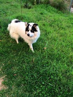 Πριν μια ωρα περιπου απο την λεωφόρο Τατόιου στην νεα Ερυθραία στο ύψος του studio 7 χάθηκε η σκυλίτσα της φωτογραφιας