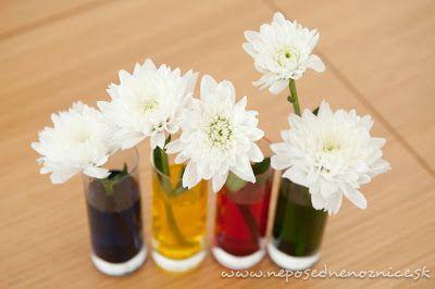 bílé květy v obarvené vodě (barvou na vejce) - květy změní barvu