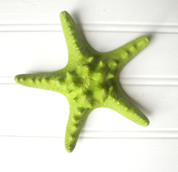 Calce verde 6 verniciato tassellati starfish ' di CoconutBeech, $5.50