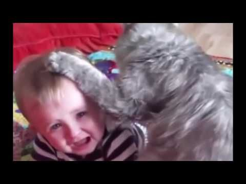 Funny cats and babies playing toghether