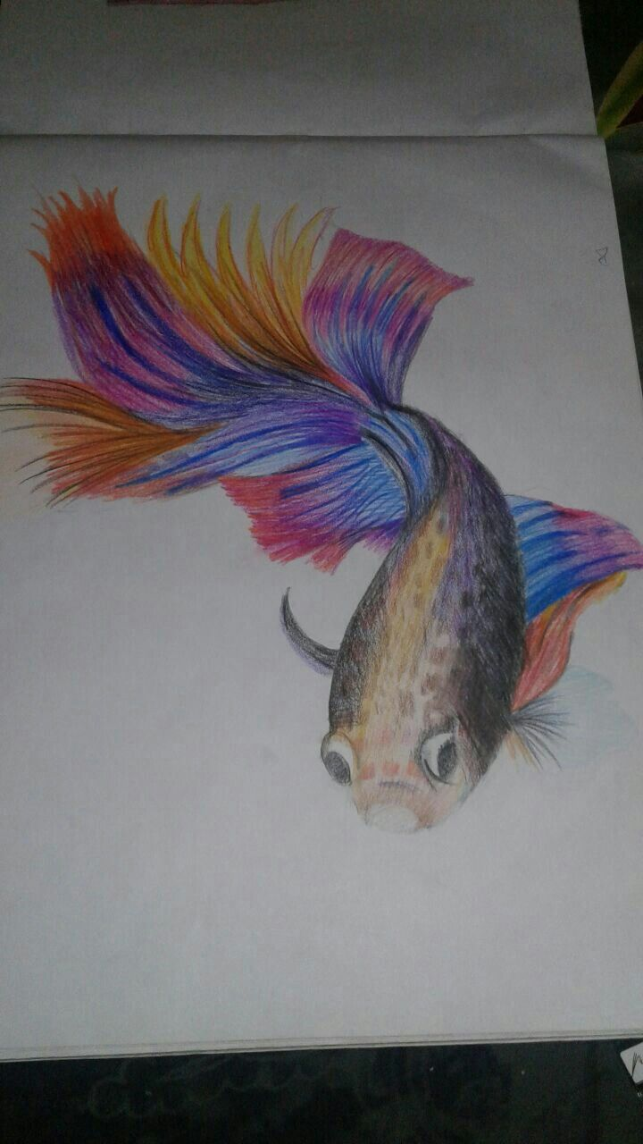 Betta fish colour pencil drawing :) Its fins are just ...