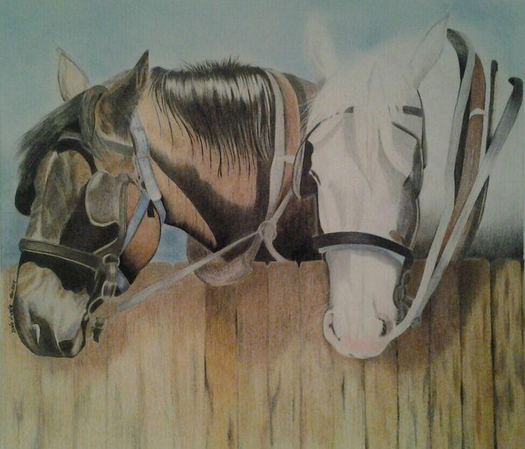 Canadian Horses - Colour Pencil - 60 x 40 - $245.00 - NOT FRAMED