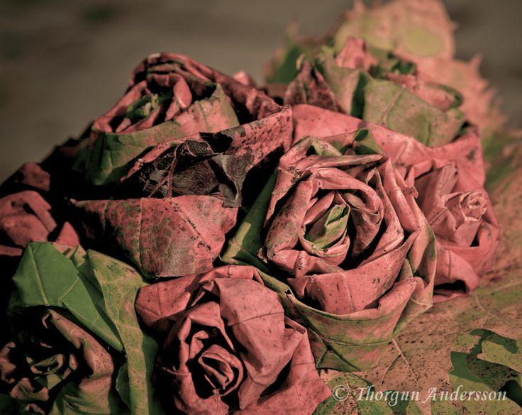 rosatriss-3