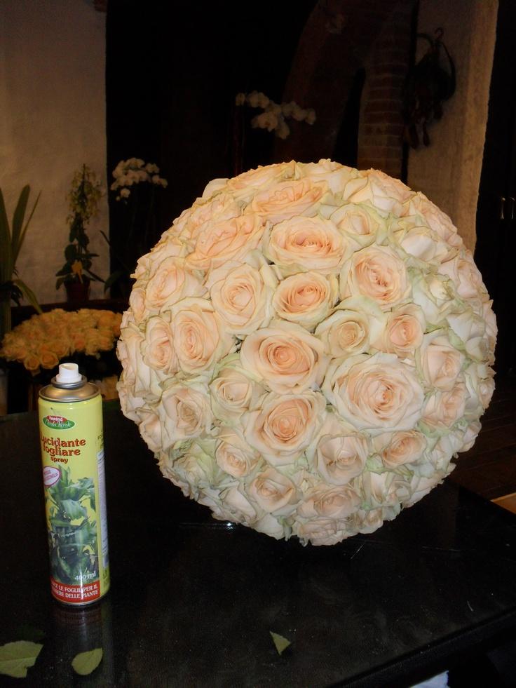 cream roses: Cream Roses