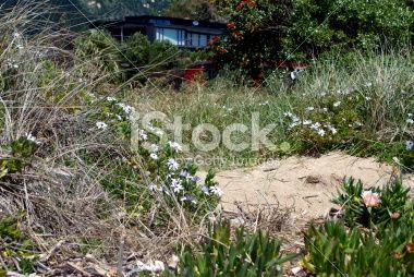 Beach Bach and Sand, New Zealand Royalty Free Stock Photo