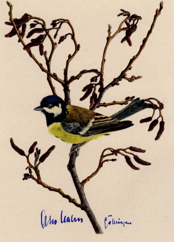 HAHN OTTO: (1879-1968) German Chemist, Nobel Prize winner for Chemistry, 1944. A vintage blue fountain pen ink signature ('Otto Hahn') to the recto of a colour picture postcard, featuring the image of a blue tit perched in a tree, as drawn by artist Otto Wulf.
