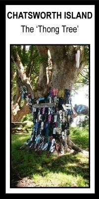 Chatsworth Island 'Thong Tree'*
