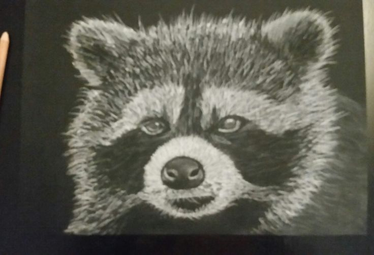 Racoon in progress shot. Artist Tracey Everington of Tracey Lee Art Designs  www.traceyleeartdesigns.com