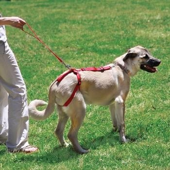 Best Harnesses For Dogs With Hip Problems